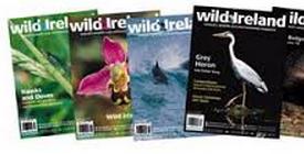 Wild Ireland Magazine